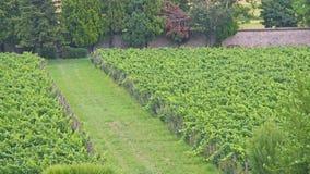 Uva y vid cultivadas por los entusiastas y los pacientes Benedictin Fotografía de archivo libre de regalías