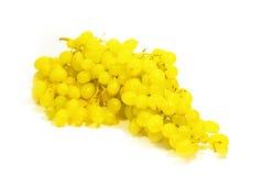 Uvas amarelas Imagens de Stock Royalty Free