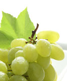 Uvas amarelas frescas Fotos de Stock