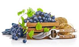 Uvas azuis na caixa de madeira com da videira da tesoura de podar manual a folha do verde da luva da vida ainda, no fundo branco fotos de stock