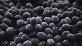 Uvas azul marino Manojos de uvas almacen de video