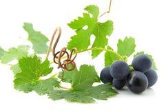 Uvas azules con las hojas verdes Fotografía de archivo libre de regalías