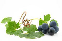 Uvas azules con las hojas verdes Fotografía de archivo