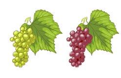 Uvas blancas y rosadas. Fotografía de archivo