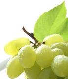Uvas brancas Imagens de Stock