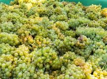 Uvas brancas Foto de Stock