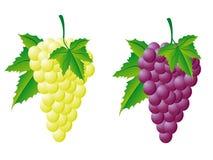 Uvas brancas e vermelhas Foto de Stock Royalty Free