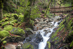 Uvas Canyon Waterfall and Walkway Stock Photo