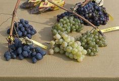 Uvas clasificadas Foto de archivo libre de regalías