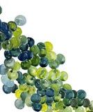 Uvas coloridas con el fondo blanco Foto de archivo libre de regalías