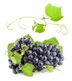 Uvas com folhas foto de stock