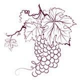 Uvas com folhas ilustração royalty free