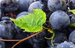 Uvas com gotas da água imagens de stock