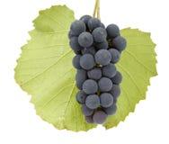 Uvas con la hoja Imagen de archivo