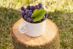 Uvas con la hoja en taza metálica en tocón de madera en jardín el día soleado Imagen de archivo