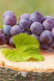 Uvas con la hoja en tocón de madera en jardín el día soleado Imagenes de archivo