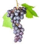Uvas con las hojas en el fondo blanco Fotos de archivo libres de regalías