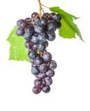 Uvas con las hojas, en el fondo blanco Fotografía de archivo