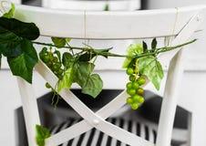 Uvas con las hojas verdes fotografía de archivo