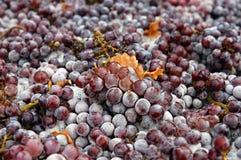 Uvas congeladas Fotos de archivo libres de regalías