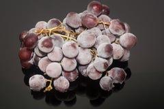 Uvas congeladas o uvas en el aislamiento del hielo en el fondo negro Imagenes de archivo
