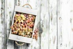 Uvas cor-de-rosa na caixa fotos de stock royalty free
