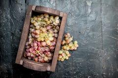 Uvas cor-de-rosa na caixa fotos de stock