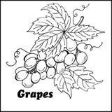 Uvas de alta calidad libre illustration