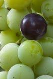 Uvas de concordia Fotos de archivo