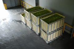 Uvas de la yarda del vino Fotos de archivo libres de regalías