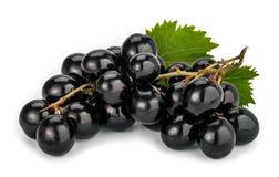 Uvas de moscatel negras Imagen de archivo libre de regalías