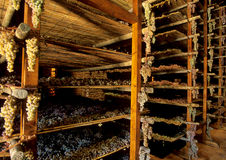 Uvas de Santo Avignonesi imagem de stock