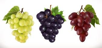 Uvas de tabla rojas y blancas, uvas de vino Sistema del icono del vector Foto de archivo