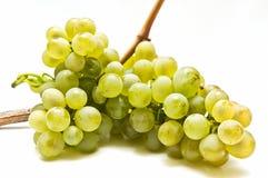 Uvas de vino Imagen de archivo
