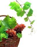 Uvas de vino en cesta imagen de archivo