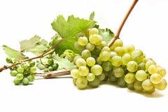 Uvas del vino blanco Imagen de archivo