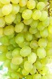 Uvas del vino blanco en la rama Foto de archivo