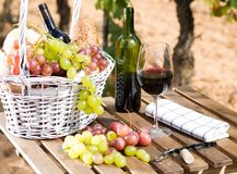 Uvas del vino rojo y cesta maduras de la comida campestre en la tabla en viñedo Foto de archivo libre de regalías