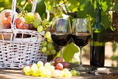 Uvas del vino rojo y cesta maduras de la comida campestre en la tabla en viñedo Foto de archivo