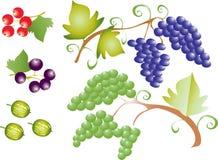 Uvas do fruto Imagem de Stock Royalty Free