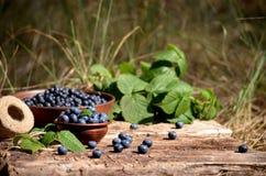 Uvas-do-monte e amoras-pretas Imagens de Stock