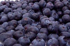 Uvas-do-monte frescas Fotos de Stock