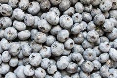 Uvas-do-monte frescas Fundo da uva-do-monte O conceito de natural imagem de stock