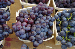 Uvas do vinho tinto Fotografia de Stock Royalty Free