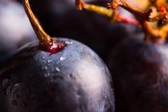 Uvas do vinho tinto Imagem de Stock