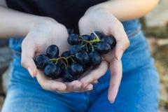 Uvas dulces en manos de la muchacha fotografía de archivo libre de regalías