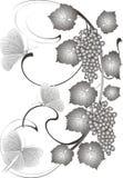 Uvas e borboletas Fotografia de Stock