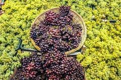 Uvas e cesta imagem de stock