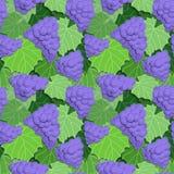 Uvas e folhas Fotografia de Stock Royalty Free