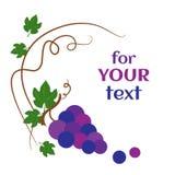 Uvas e folhas, fundo decorativo Ilustra??o do vetor ilustração royalty free